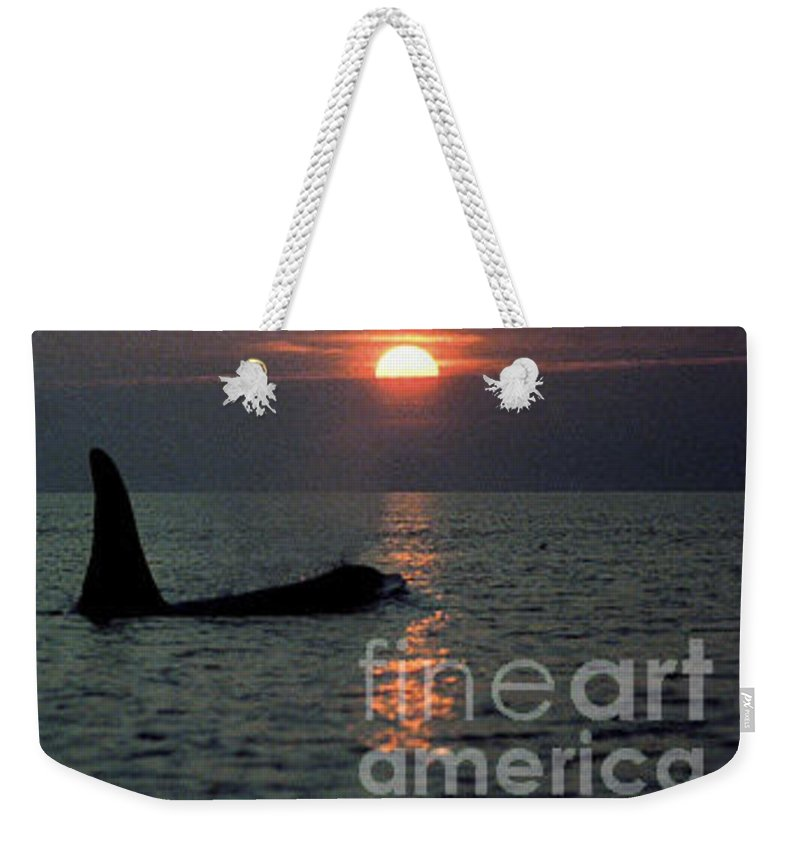 Male Weekender Tote Bag featuring the photograph Male Orca At Sunset Off San Juan Island Washington 1986 by California Views Archives Mr Pat Hathaway Archives