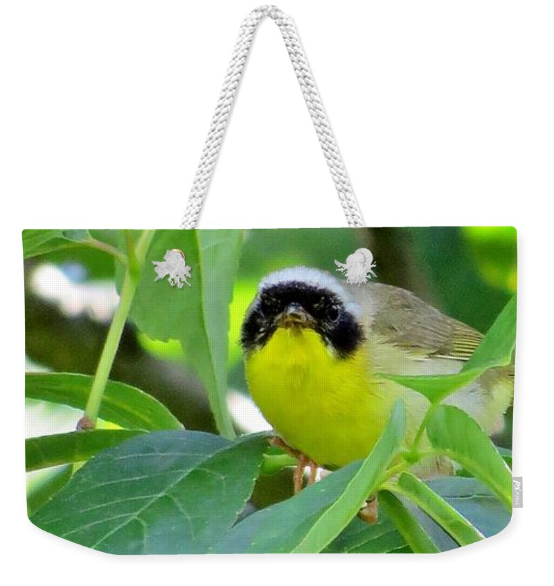 Bird Weekender Tote Bag featuring the photograph Male Warbler by Art Dingo