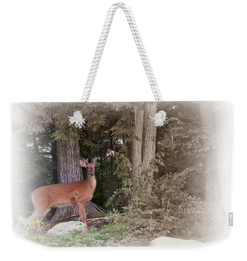 Male Deer Weekender Tote Bag featuring the photograph Male Whitetail Deer by MTBobbins Photography