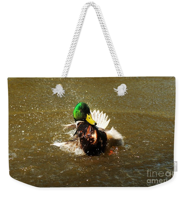 Mallard Weekender Tote Bag featuring the photograph Mallard Bath Time by Vivian Christopher