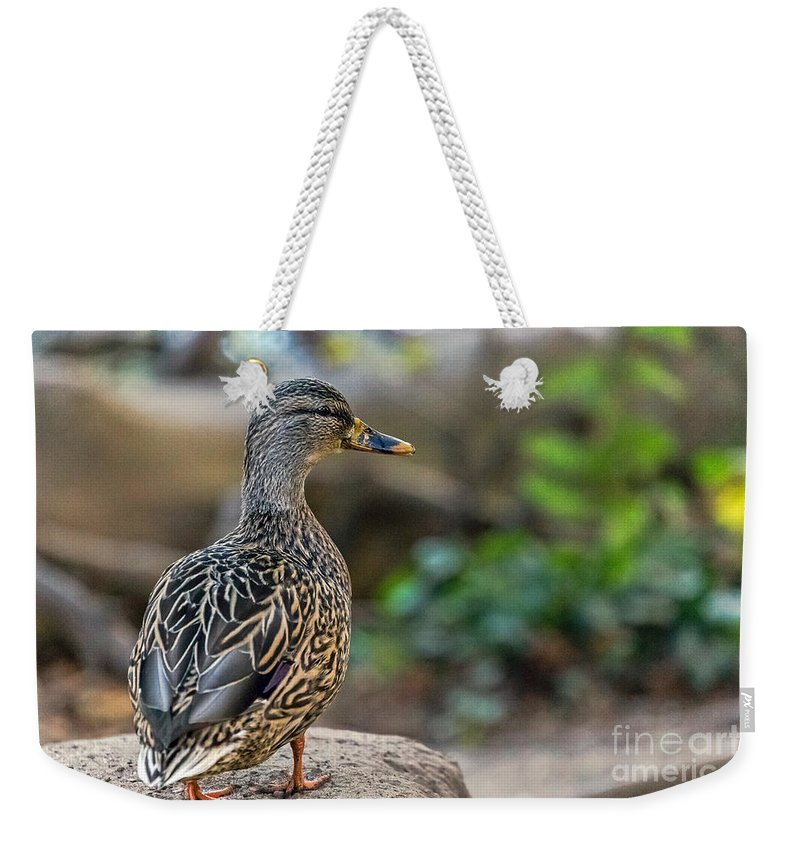 Anas Platyrhynchos Weekender Tote Bag featuring the photograph Mallard Hen Observing by Kate Brown