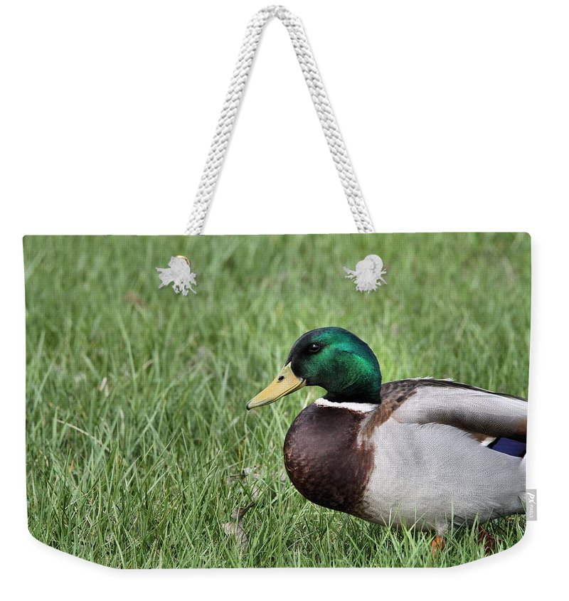 Mallard In The Grass Weekender Tote Bag featuring the photograph Mallard In The Grass by Dan Sproul