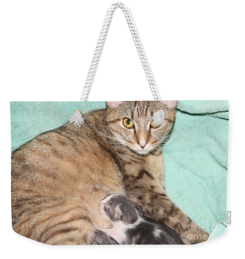 Cat Weekender Tote Bag featuring the photograph Mama Cat And Her Kittens by Michelle Powell