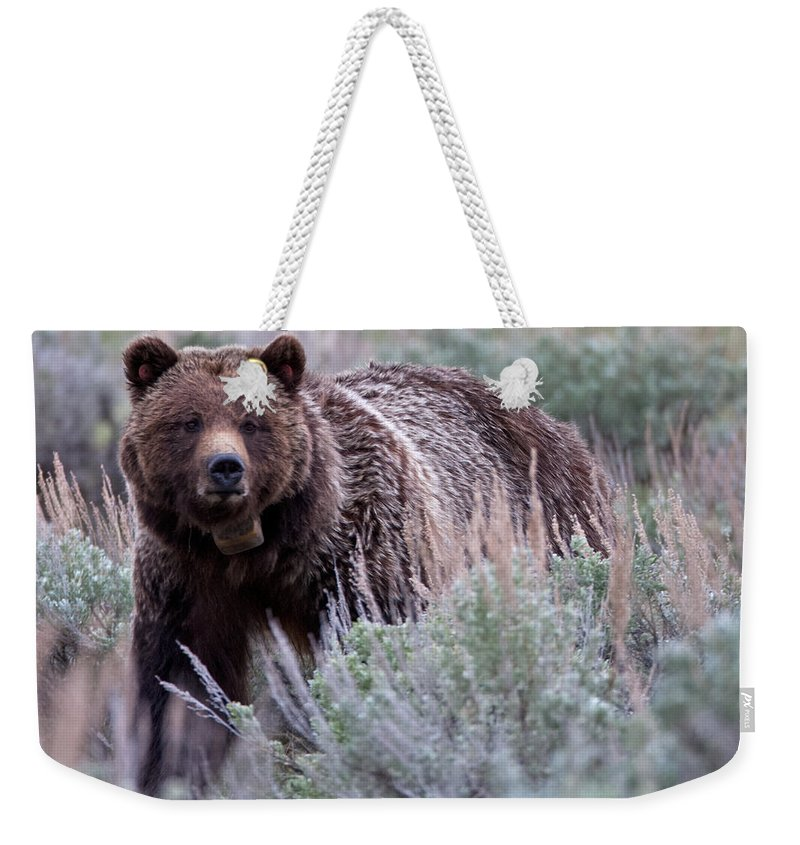 Grizzly Weekender Tote Bag featuring the photograph Mama Grizzly by Natural Focal Point Photography