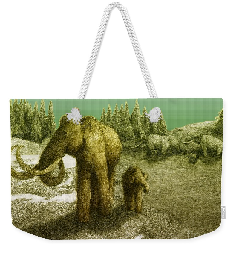 Woolly Mammoth Weekender Tote Bag featuring the photograph Mammoths by Spencer Sutton