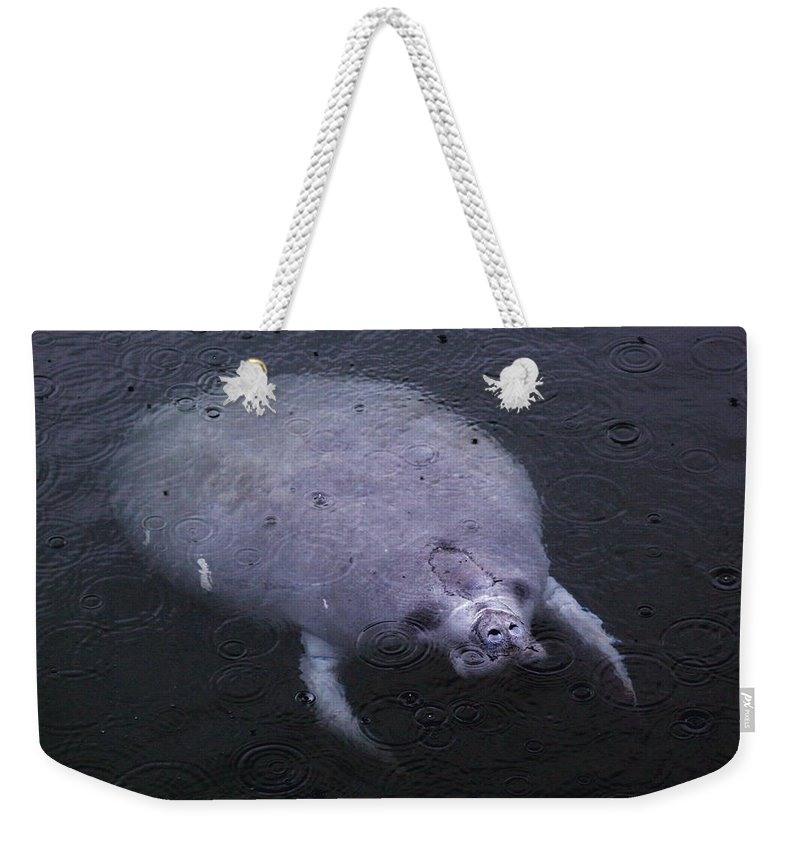 Manatee Weekender Tote Bag featuring the photograph Manatee In The Rain by Myrna Bradshaw