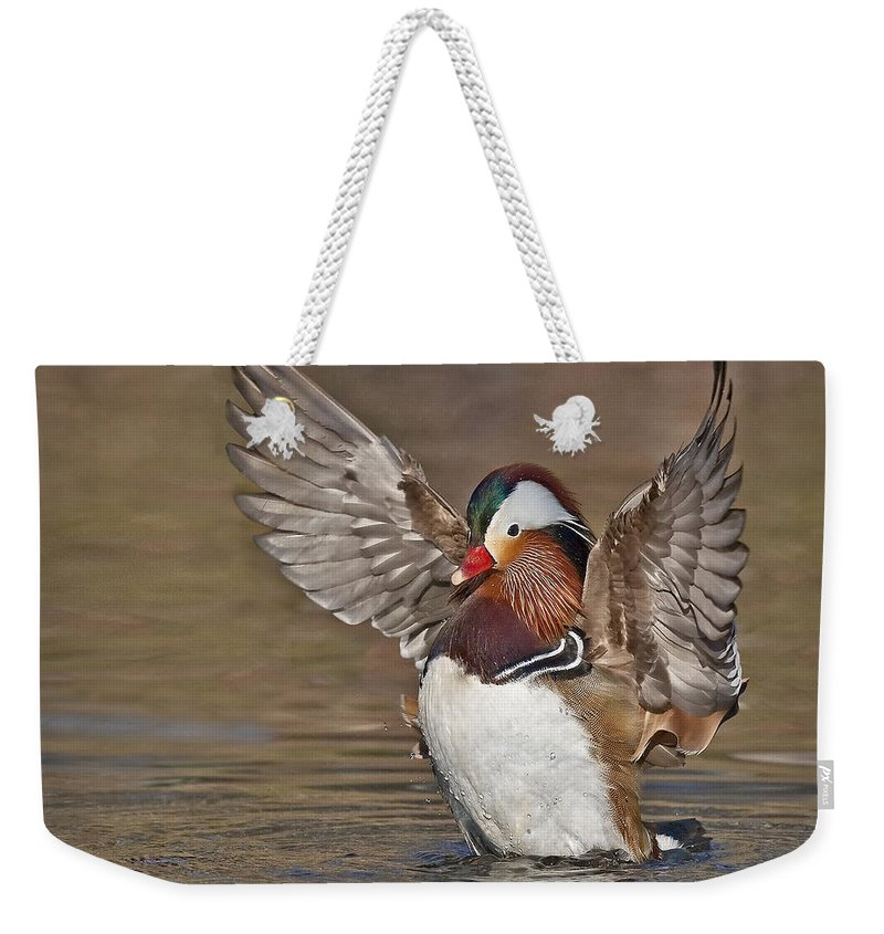 America Weekender Tote Bag featuring the photograph Mandarin Duck Flapping Away by Susan Candelario