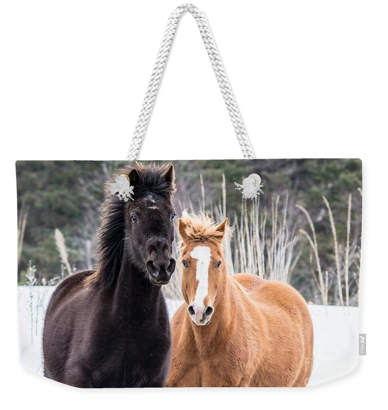 Horse Weekender Tote Bag featuring the photograph Manes Flying by Cheryl Baxter