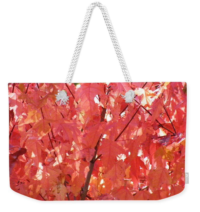 Maple Weekender Tote Bag featuring the photograph Maple Madder by Brian Boyle