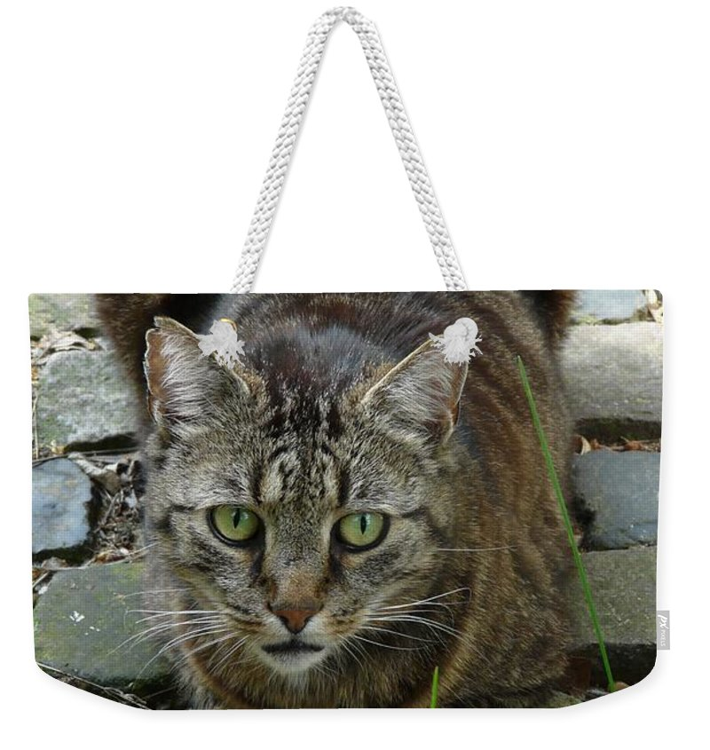 Cat Weekender Tote Bag featuring the photograph Marco by Valerie Ornstein
