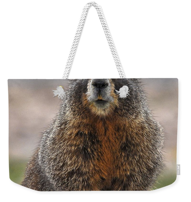 Marmot Photograph In Colorado Mountains Weekender Tote Bag featuring the photograph Marmot by Mae Wertz