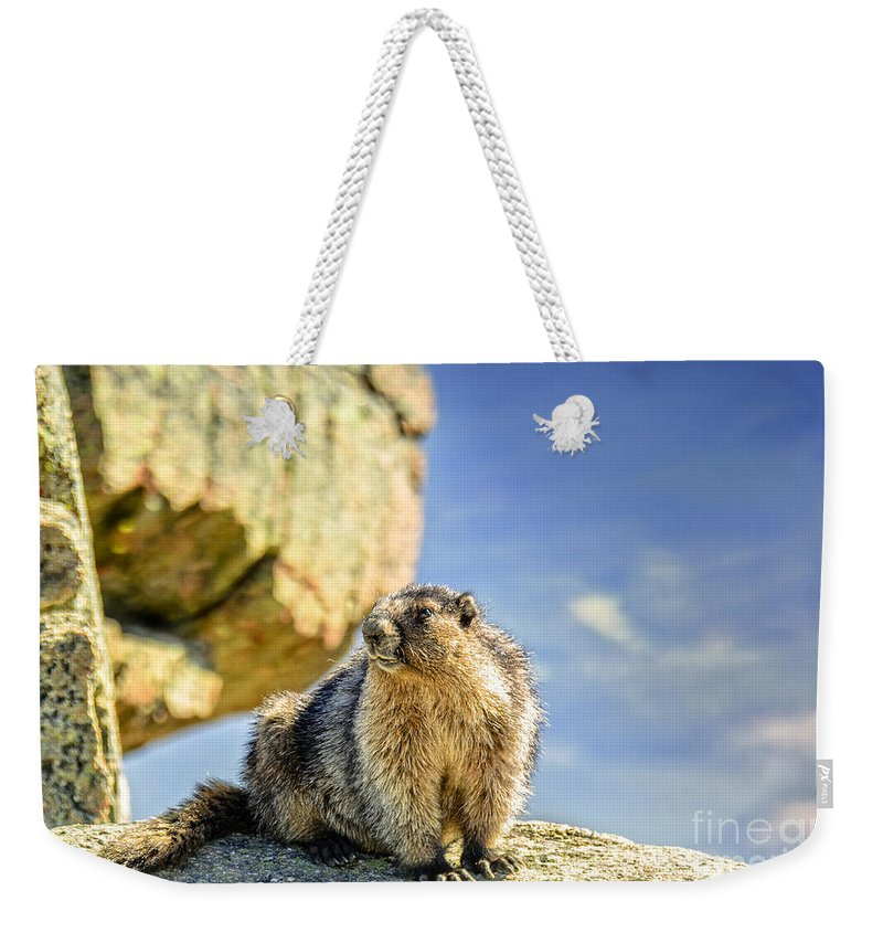 Marmot Weekender Tote Bag featuring the photograph Marmot by Viktor Birkus