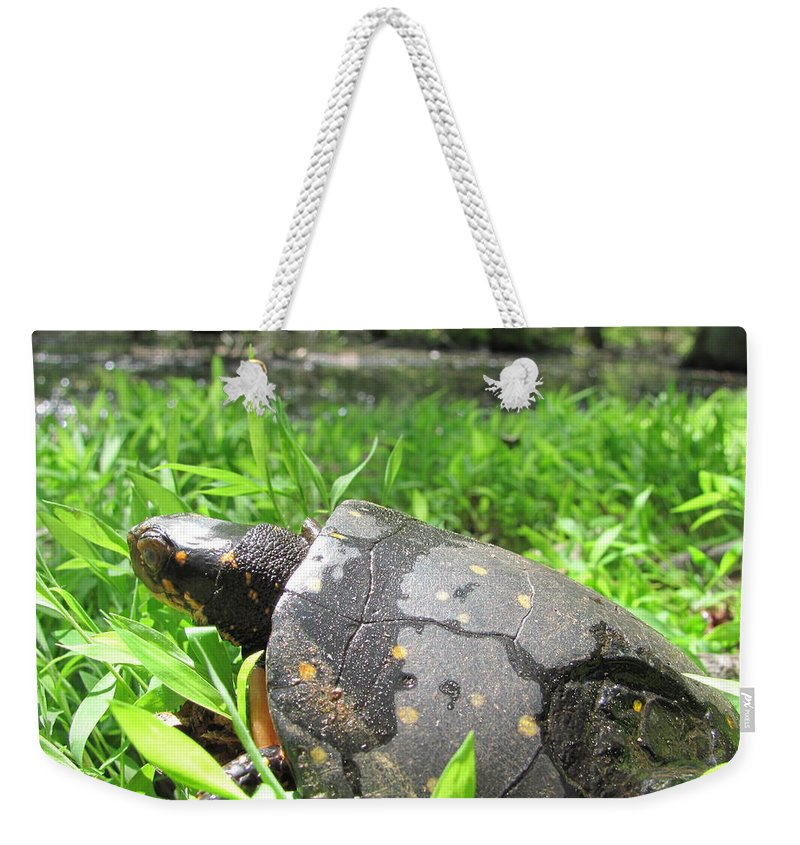 Maryland Spotted Turtle Images Endangered Species Spotted Turtle Photograph Prints Spotted Turtle Pictures Maryland Reptile Images Turtles Of Maryland Rare Turtle Images Rare Habitat Biodiversity Nature Weekender Tote Bag featuring the photograph Maryland Spotted Turtle by Joshua Bales