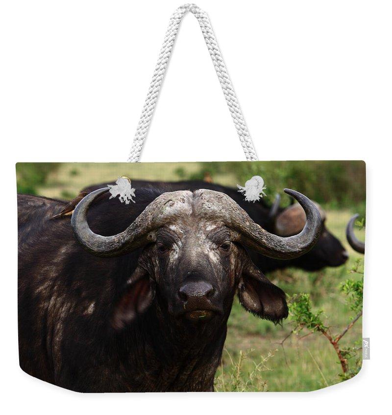 Buffalo Weekender Tote Bag featuring the photograph Masai Mara Buffalo by Aidan Moran