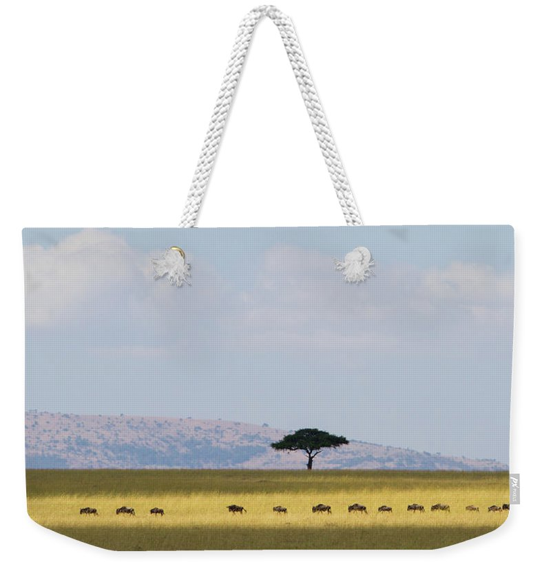Kenya Weekender Tote Bag featuring the photograph Masai Mara Wildebeest Migration by Universal Stopping Point Photography