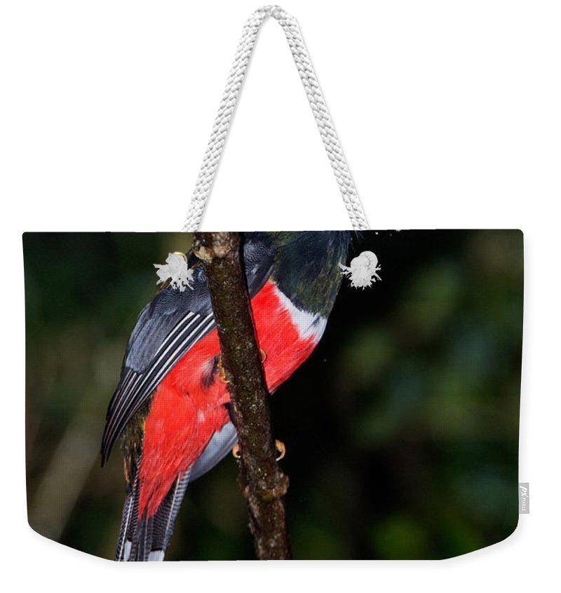Masked Trogon Weekender Tote Bag featuring the photograph Masked Trogon With Moth by Anthony Mercieca