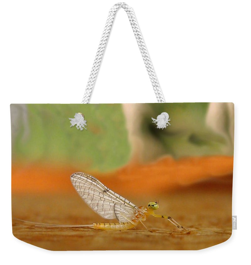 Mayfly Weekender Tote Bag featuring the photograph Mayfly Art by Thomas Young