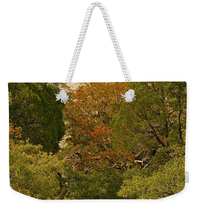 Guadalupe Mountains National Park Texas Mckittrick Canyon Trail Trails Madrone Tree Trees Nature Path Paths Rock Rocks Mountain Landscape Landscapes Weekender Tote Bag featuring the photograph Mckittrick Canyon Trail by Bob Phillips