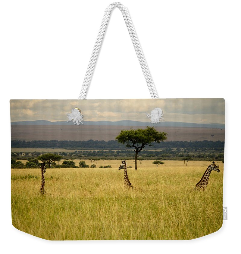 Giraffes Weekender Tote Bag featuring the photograph Meeting Of The Minds by Amy Warr