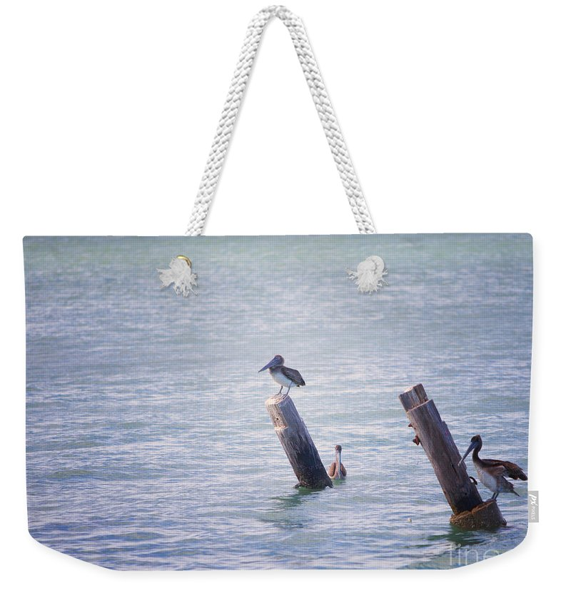 Shore Birds Weekender Tote Bag featuring the photograph Meeting Place by Erika Weber