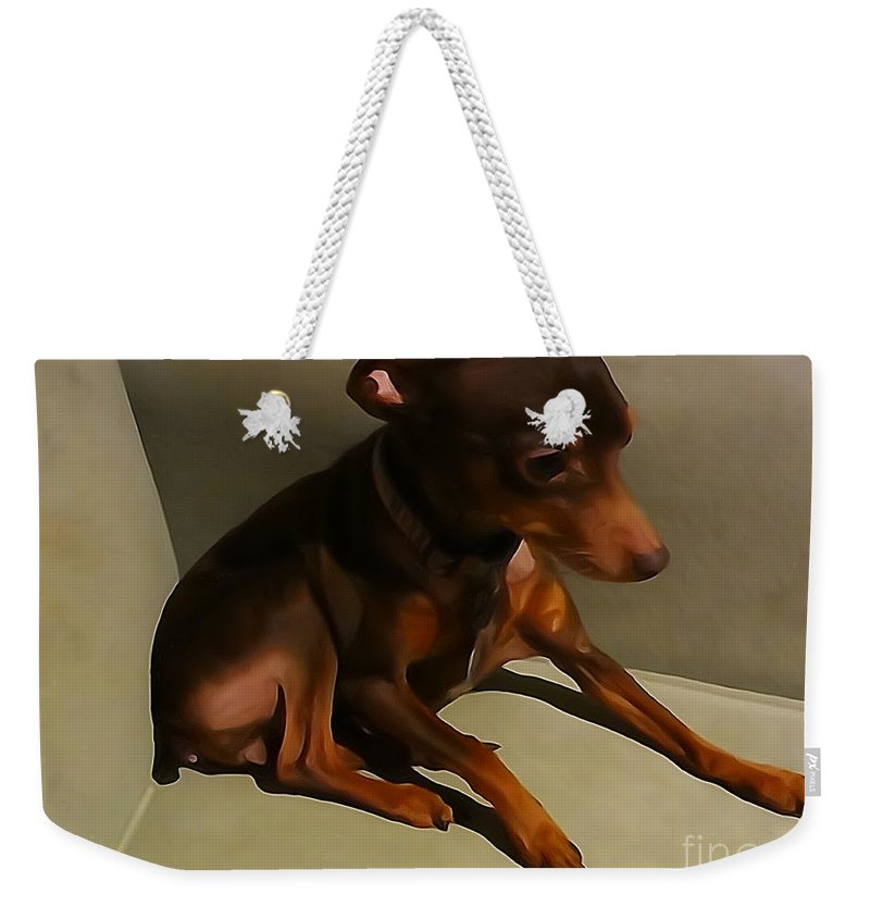 Miniature Doberman Min Pin Doggy Puppy Dog Chocolate Weekender Tote Bag featuring the photograph Mercedes by Robert Loe