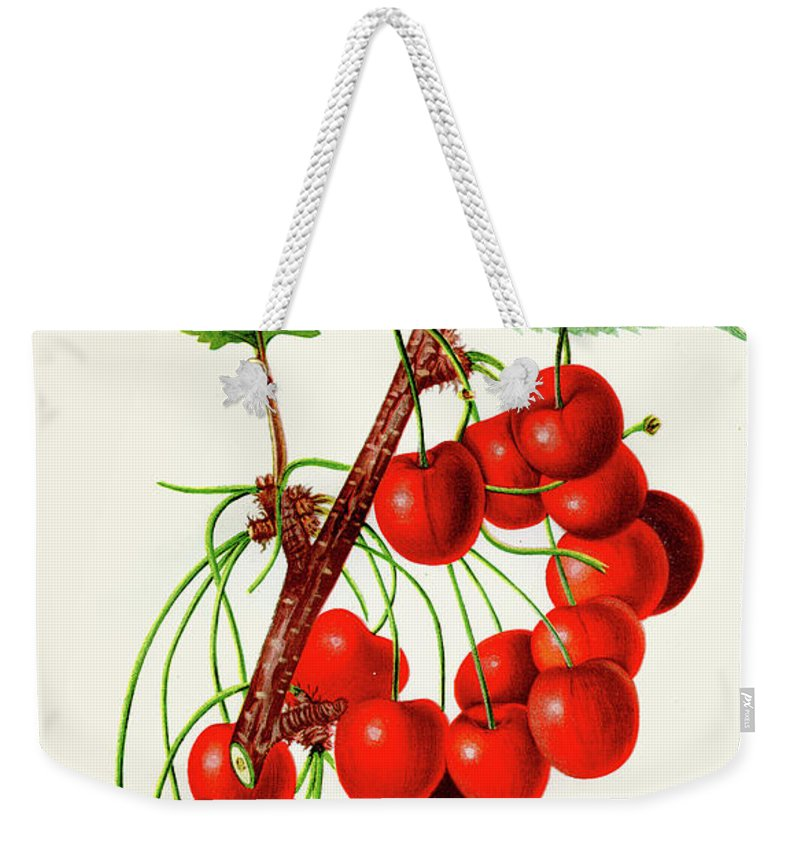Engraving Weekender Tote Bag featuring the digital art Mercer Cherry Illustration 1892 by Thepalmer