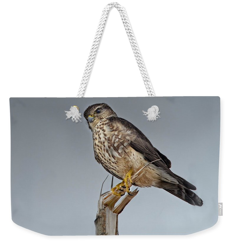 Merlin Falcon Weekender Tote Bag featuring the photograph Merlin Falcon by Sue Capuano