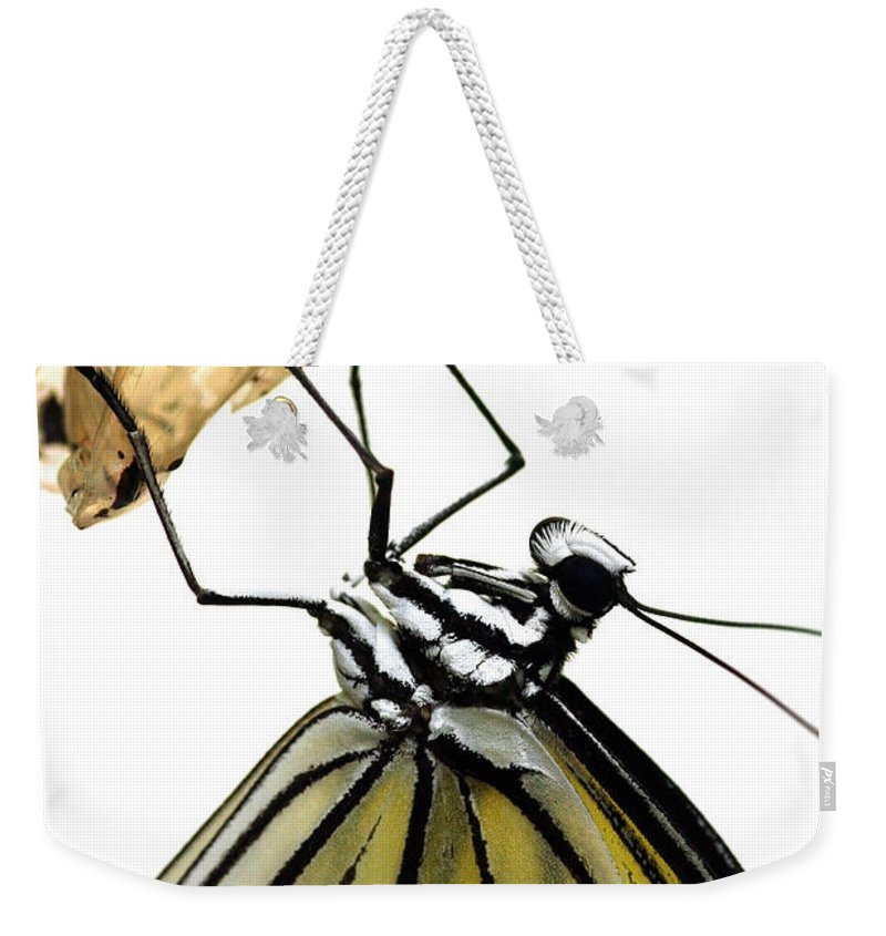 Idea Leuconoe Weekender Tote Bag featuring the photograph Metamorphosis by Roeselien Raimond
