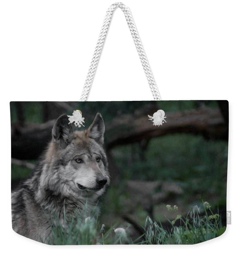 Wolf Weekender Tote Bag featuring the digital art Mexican Grey Wolf by Ernie Echols