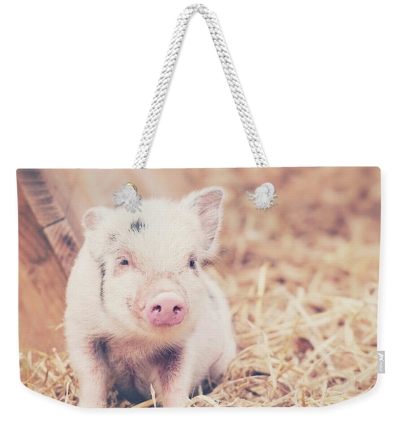Pig Weekender Tote Bag featuring the photograph Micro Pig by Samantha Nicol Art Photography