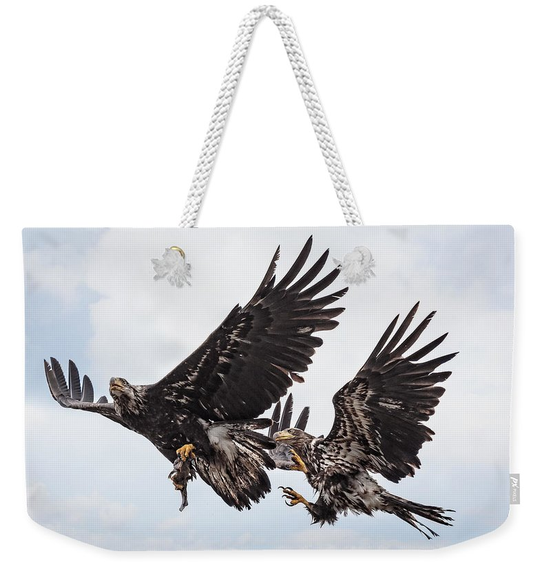 Midair Fish Steal Weekender Tote Bag featuring the photograph Midair Fish Steal by Wes and Dotty Weber