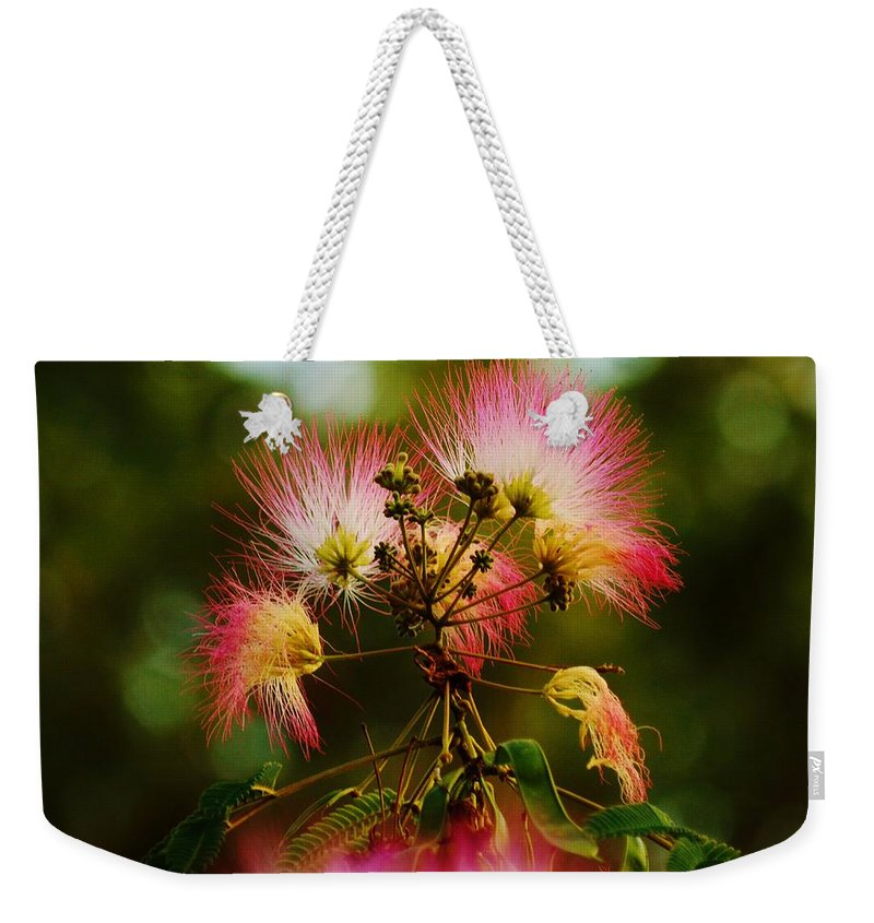 Beach Bum Pics Weekender Tote Bag featuring the photograph Mimosa Blooms by William Bartholomew