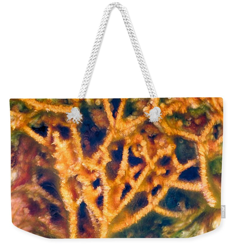 Hot Springs Weekender Tote Bag featuring the photograph Mineral Branches Hot Springs by Scott Campbell