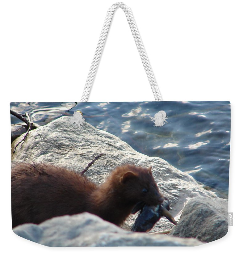 American Mink Weekender Tote Bag featuring the photograph Mink with a Round Goby by Randy J Heath