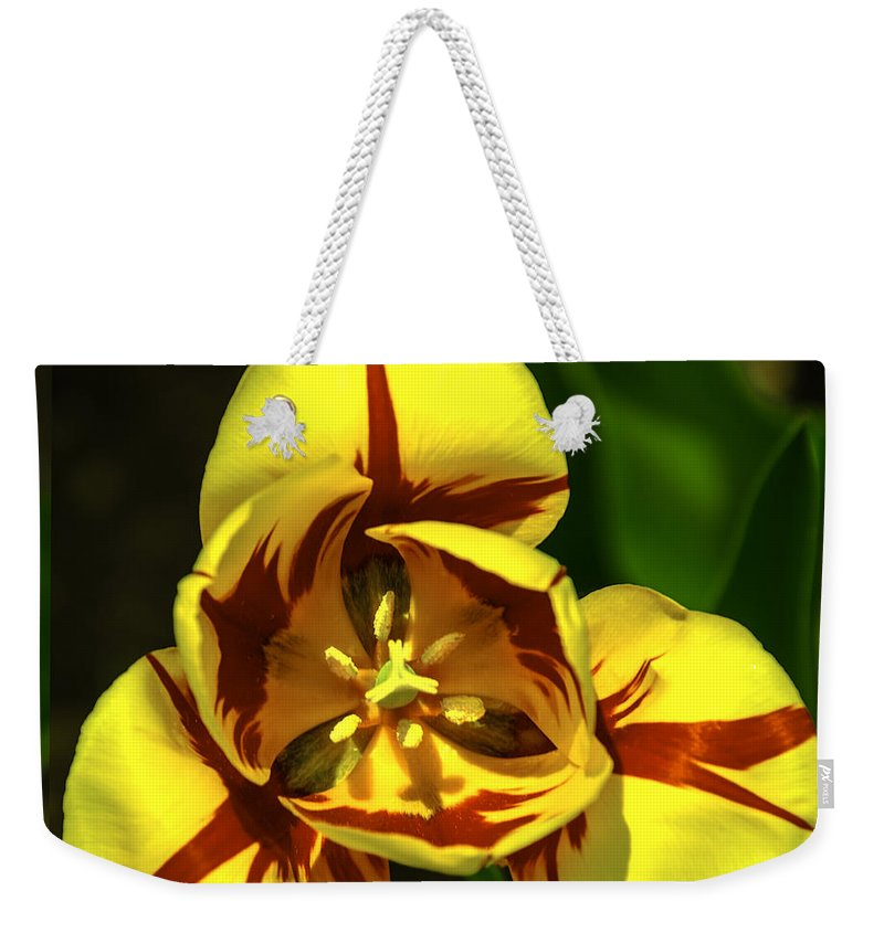 Usa Weekender Tote Bag featuring the photograph Mirrored Tulip Time by LeeAnn McLaneGoetz McLaneGoetzStudioLLCcom