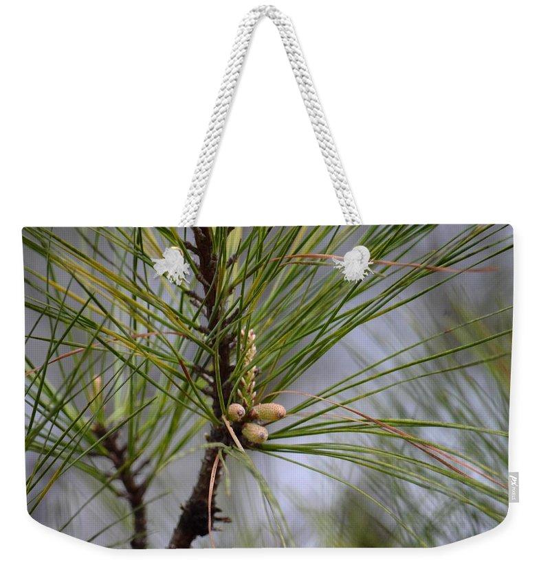Misty Pines In Spring 2013 Weekender Tote Bag featuring the photograph Misty Pines In Spring 2013 by Maria Urso