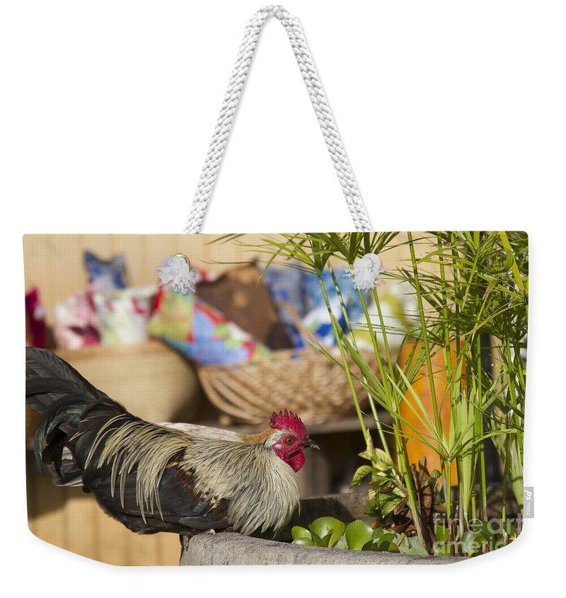Aloha Weekender Tote Bag featuring the photograph Moa Kane O Haiku by Sharon Mau