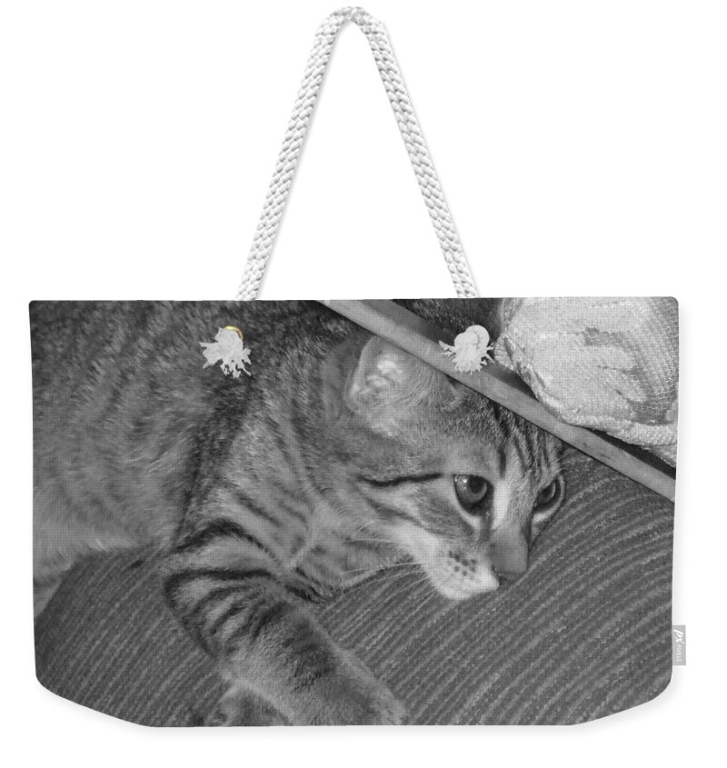 Kitten Weekender Tote Bag featuring the photograph Model Kitten by Pharris Art