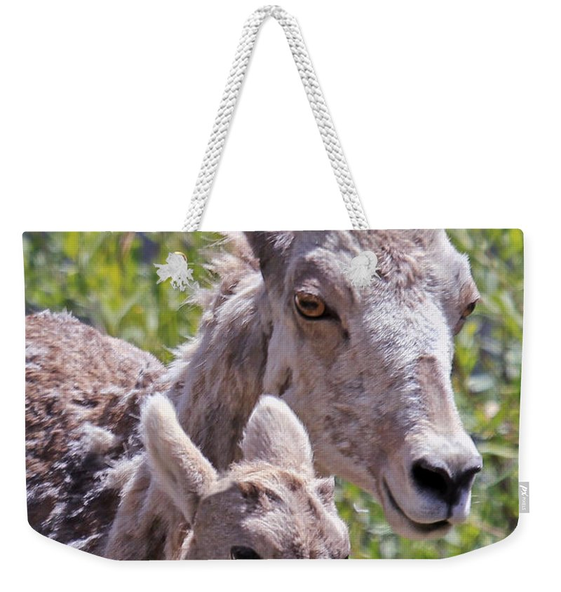 Bighorn Sheep Weekender Tote Bag featuring the photograph Momma And Baby Ram by Athena Mckinzie