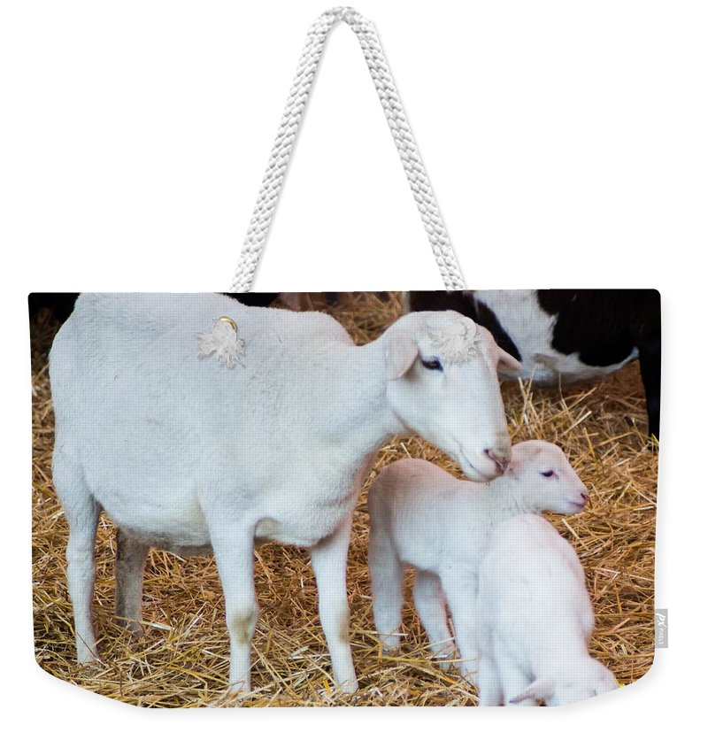 Mother Weekender Tote Bag featuring the photograph Momma And Newborns by Photographic Arts And Design Studio