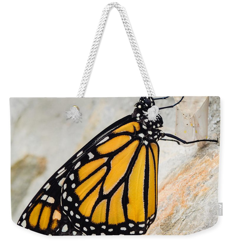 Monarch Butterfly Weekender Tote Bag featuring the photograph Monarch Butterfly Just Emerged From Her Chrysalis by Dawna Moore Photography