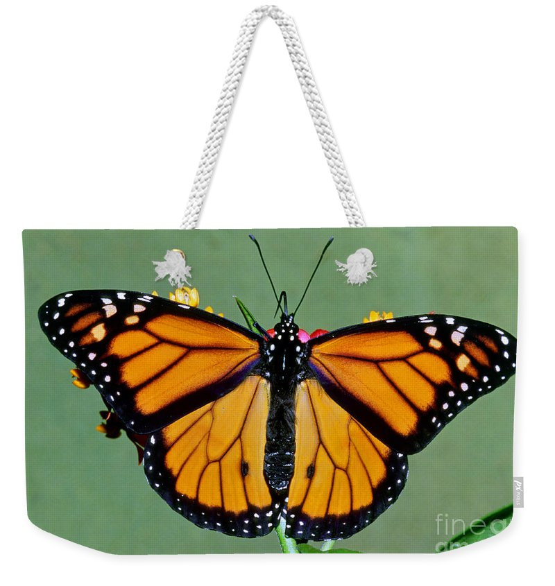 Monarch Weekender Tote Bag featuring the photograph Monarch Butterfly by Millard Sharp