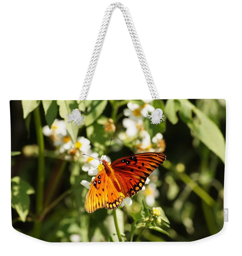 Monarch Butterfly Weekender Tote Bag featuring the photograph Monarch Butterfly by Paul Wilford