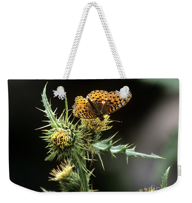 Butterfly Weekender Tote Bag featuring the photograph Monarch On Thistle by Kathy McClure