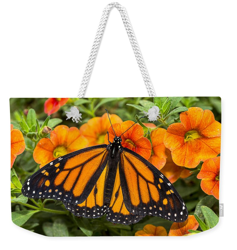 Monarch Weekender Tote Bag featuring the photograph Monarch Resting by Garry Gay