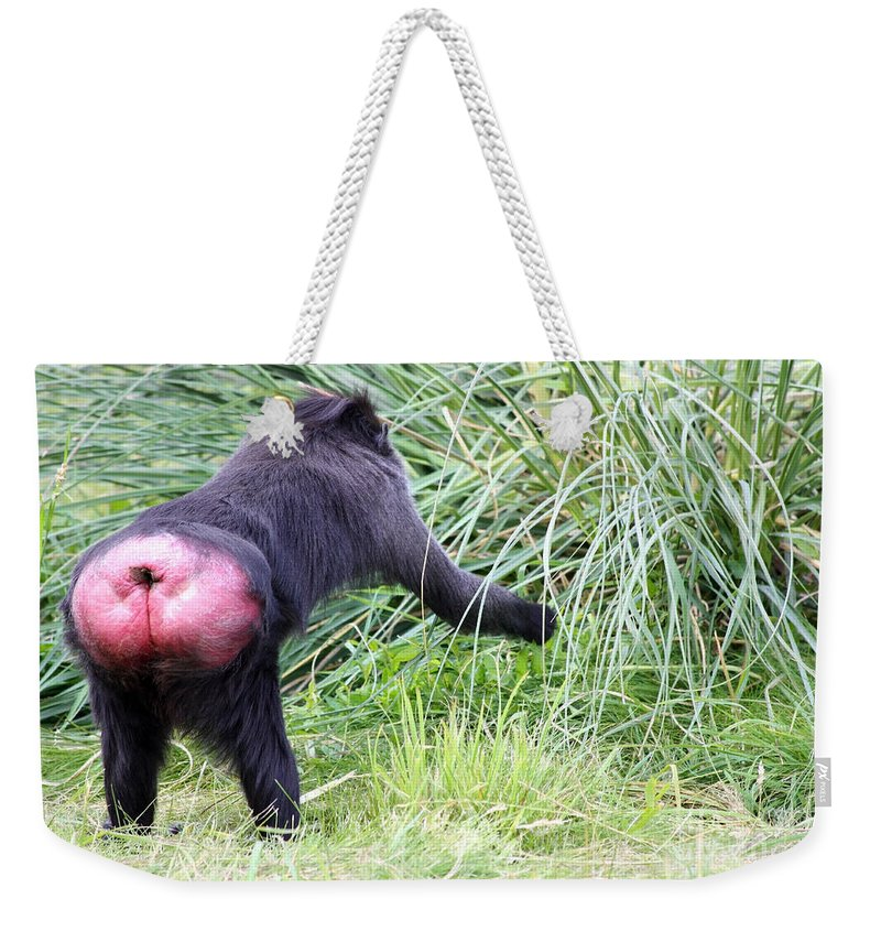 Zoo Weekender Tote Bag featuring the photograph Monkey Showing Red Bottom by Simon Bratt Photography LRPS