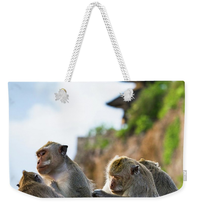 Animal Themes Weekender Tote Bag featuring the photograph Monkeys At Uluwatu Temple by Matthew Micah Wright