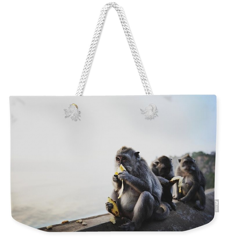 In A Row Weekender Tote Bag featuring the photograph Monkeys Eating Bananas by Carlina Teteris