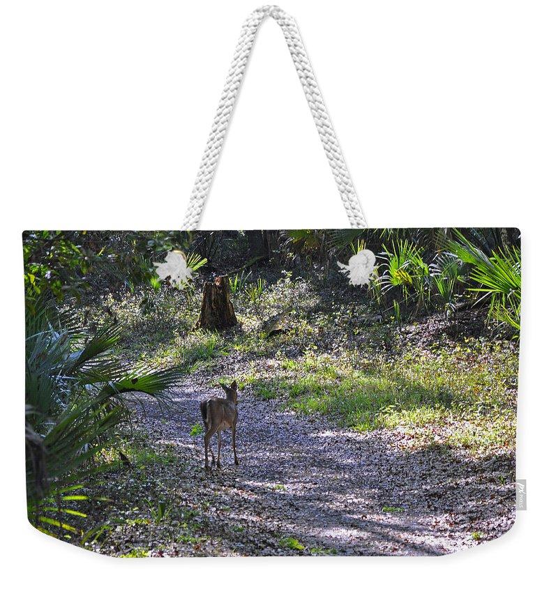 Animals Weekender Tote Bag featuring the photograph Morning Deer by Deborah Good