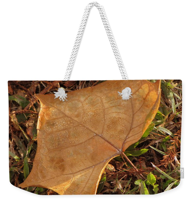 Morning Dew Weekender Tote Bag featuring the photograph Morning Dew by Beth Vincent